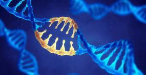 représentation de l'ADN