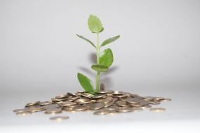 Une plante qui semble pousser d'un tas de monnaies.
