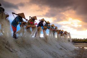Une rangée de femmes travaillant dans une rizière.