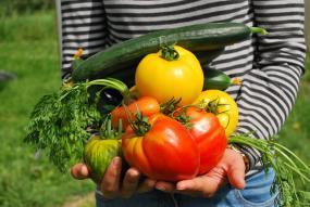 une personne tient entre ses mains plusieurs légumes