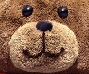 Extrait de la page couverture du rapport. Photographie en très gros plan du visage d'un ours en peluche brun et souriant.