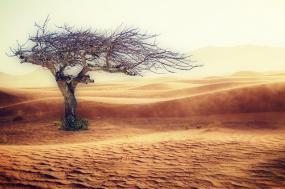Photographie d'un désert avec un arbre desséché à gauche.