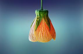 une fleur orange à l'envers