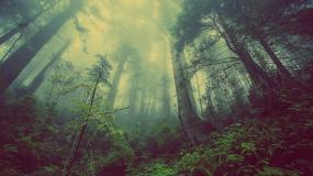 Photographie d'une forêt brumeuse.